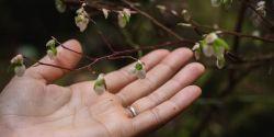листья деревьев с кольцом